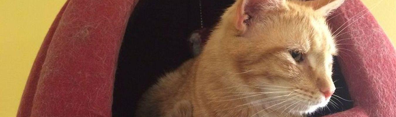 Orange Cat Red Bed