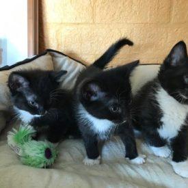 Cecilia, Giovanni, Sylvester